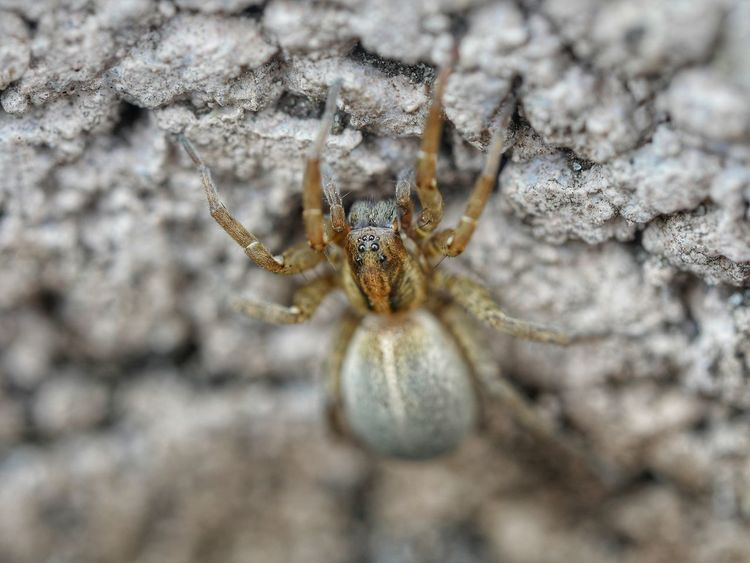 Spider Spider Eyes Macro Nature Arachnid Nature_collection Animals Animal Themes Animals In The Wild Nature On Your Doorstep Fragility From My Point Of View Taking Photos Close Up Outdoors Outdoor Photography Close-up Perspective Photography Macro_collection Perspectives Spiders
