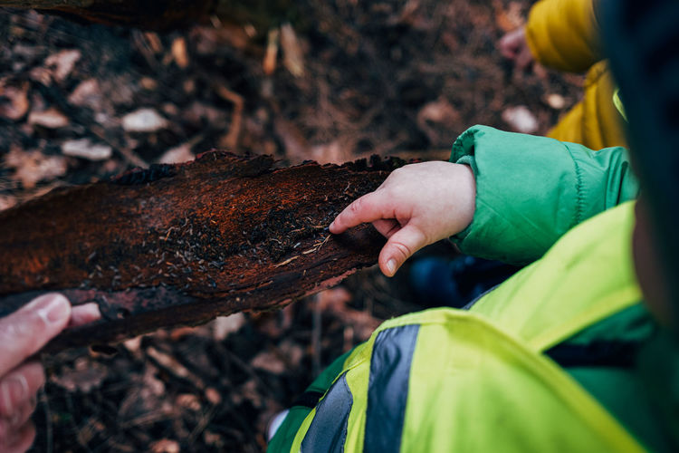 Childrens hand examining piece of tree bark in forest