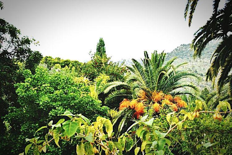 La Cote D'Azur French Riviera Cotedazur Jardins Rameh Menton Jardins Rameh Menton Côte D'Azur Jardinbotanique Palmiers Jardins