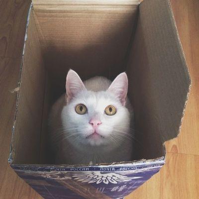 Принц Коробка Vscocam любителькоробок Цыпа Cat catstagram instacat incatswetrust box post