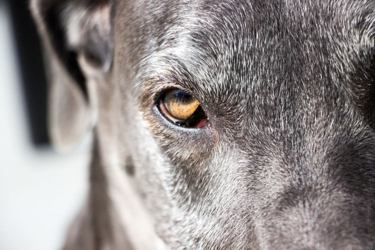 Close-Up Of Dog Eye