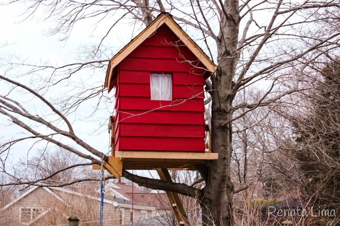 Red tree house No People Tree Nature Day Architecture Tree House♥