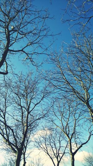 Trees Nature Photography Branches Sky
