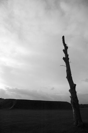 Giving The Sky The Finger Black & White Beauty In Nature Blackandwhite Branch Day Dead Tree Landscape Lone Nature No People Outdoors Sky The Finger Tranquil Scene Tranquility Tree Tree Trunk