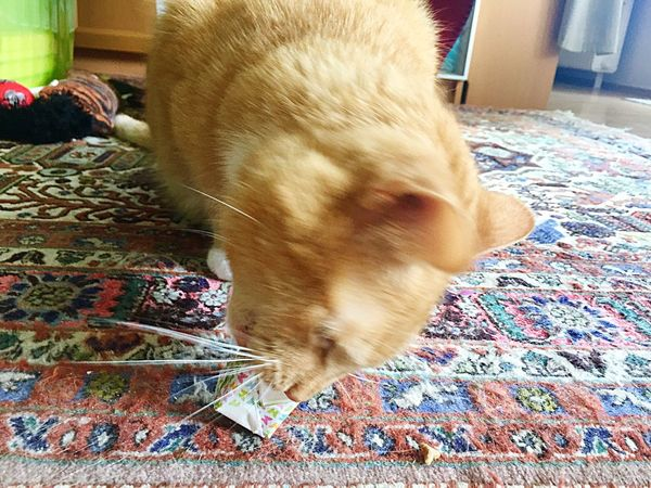 TIP loves my origami cube with goodies 🐾💖😸 Motion Hungry Cat My Cat😺🐈 Cat Posing Cat Toy 3XPSUnity Cat Photography EmNewHere Katzenpfote Catpaw Catpaws Whisker