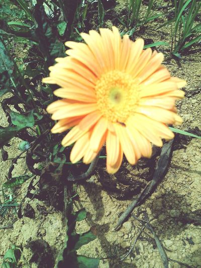 Flower of the day. Taking Photos Enjoying Life