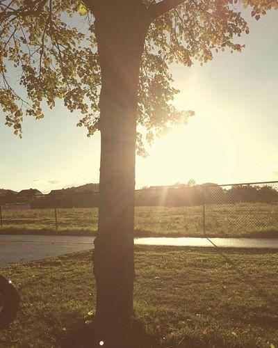 Fall Beauty L'arbre Soleil Coucher De Soleil J'aime ça. Nature Photography Dudelange Samsung Galaxy S6