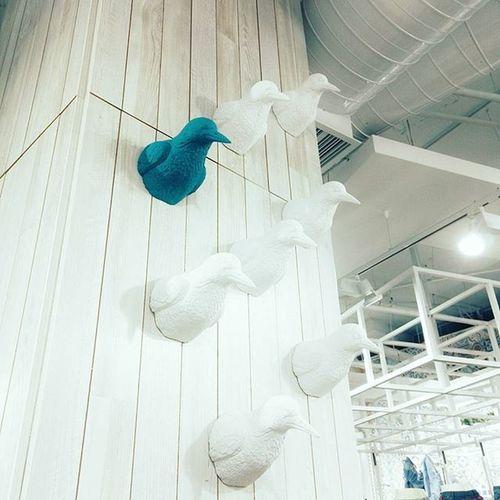 Понравилась стенка :) Befree молодцы сделали свой магазин почти как арт-пространство, хотелось многое сфоткать, но везде людиии :))) стенка птички интерьер