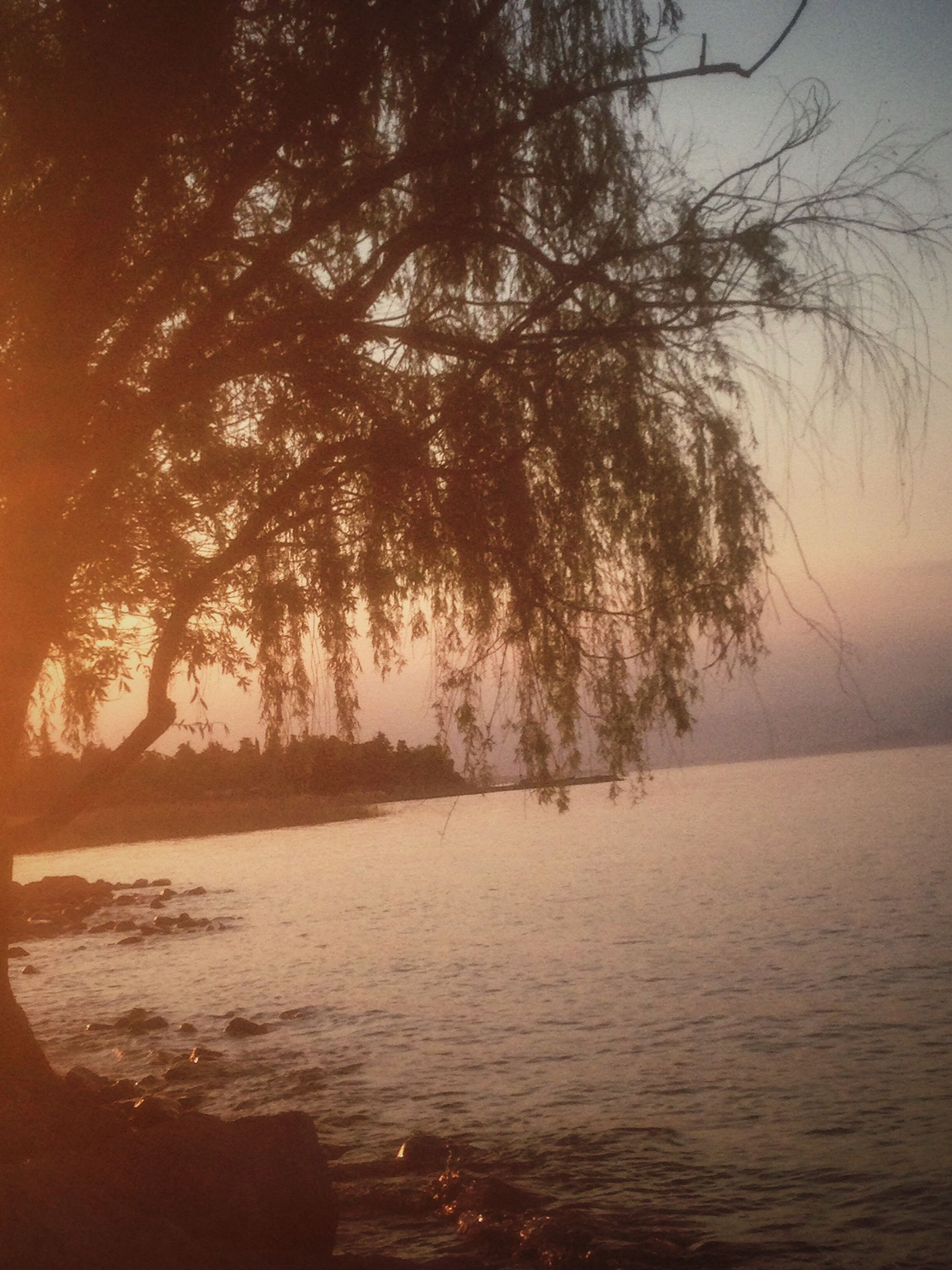 tree, water, tranquility, tranquil scene, scenics, lake, nature, beauty in nature, calm, branch, lakeshore, sky, sea, outdoors, day, non-urban scene, growth, remote, riverbank, solitude, no people, shore, majestic, lakeside