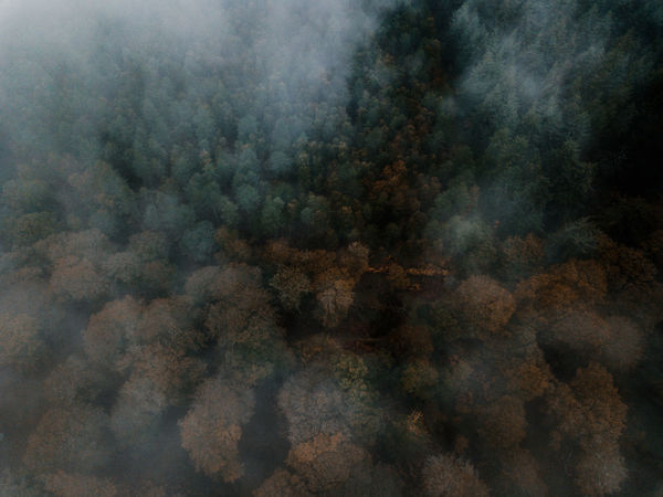 Autumn Forest drone view Cloud - Sky Backgrounds Sky No People Fog Tranquility Beauty In Nature Scenics - Nature Nature Environment Full Frame Tranquil Scene Outdoors Day Pattern Aerial View Smoke - Physical Structure Cloudscape Abstract Digital Composite Textured Effect Abstract Backgrounds