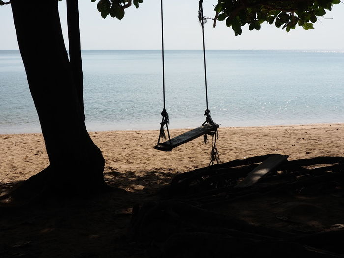 Tree Rope Swing