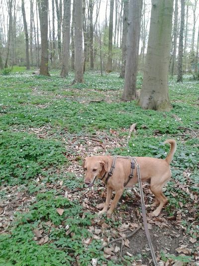 Im Wald unterwegs Mit Hund Henry!! In The Wood / Walk With The Dog / Spazierenmithund Hunderunde