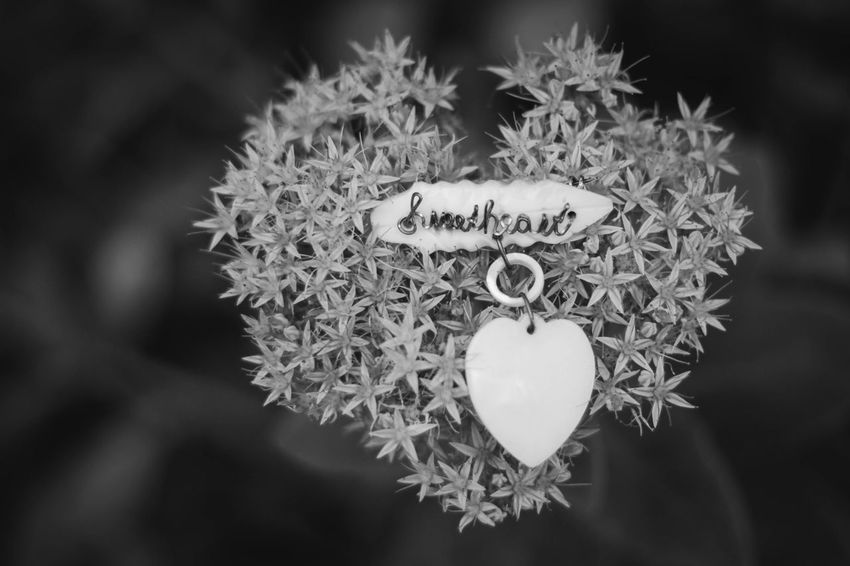 Brooch Vintage Style Accessory Black And White Black And White Collection  Celebration Gift Heart Shape Heart Shaped  Love Message New Edit No People Sweet Sweetheart Sweetheart Pin Text Vintage Jewelry Black And White Friday