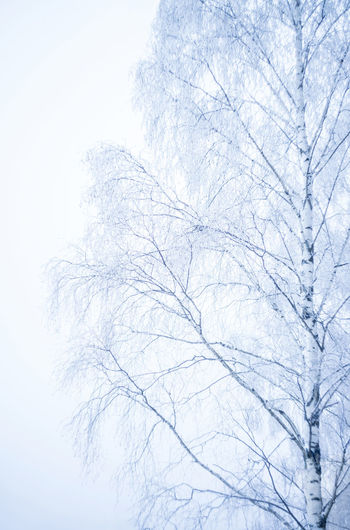 Low angle view of frozen bare tree against sky