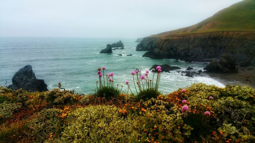 Ocean Cliffs-Wildflower Profusion Background Zen Meditation Timeless Moment Copy Space Wildflowers Pink Yellow Orange Shimmering Pattern Passion Dreams Countryside Foreground Focus Waves Distance Flower Water Sea Beach Cliff Fog Hill Power In Nature Sky Horizon Over Water Geology Headland