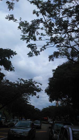 The trees make