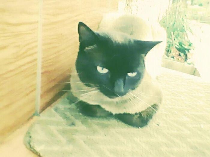 Pets Animal Themes Cats