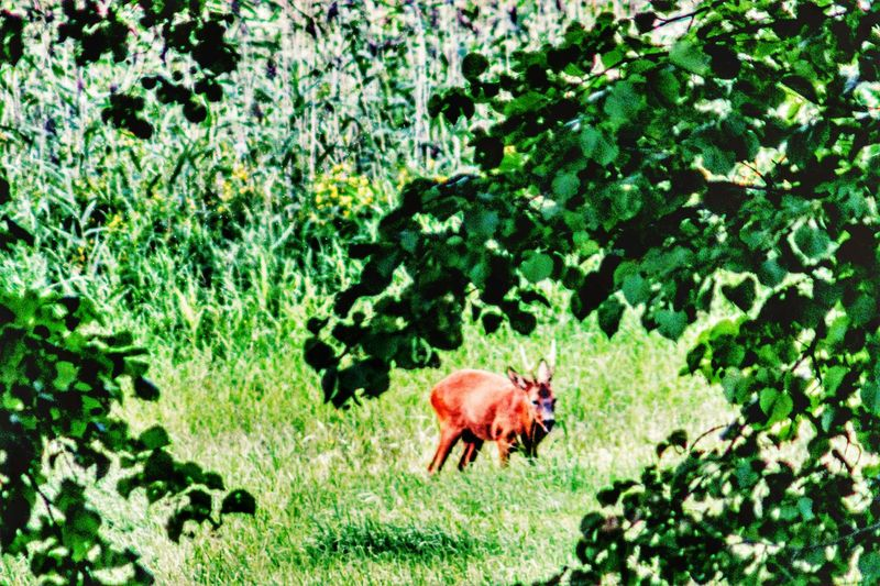 Field Turku Ruissalo Deer In The Evening Outdoors Beauty In Nature