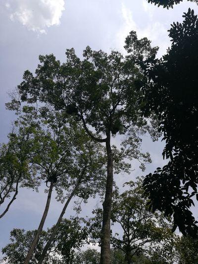 Botanical garden Tree Sky Nature Beauty In Nature Sun Shah Alam Malaysia