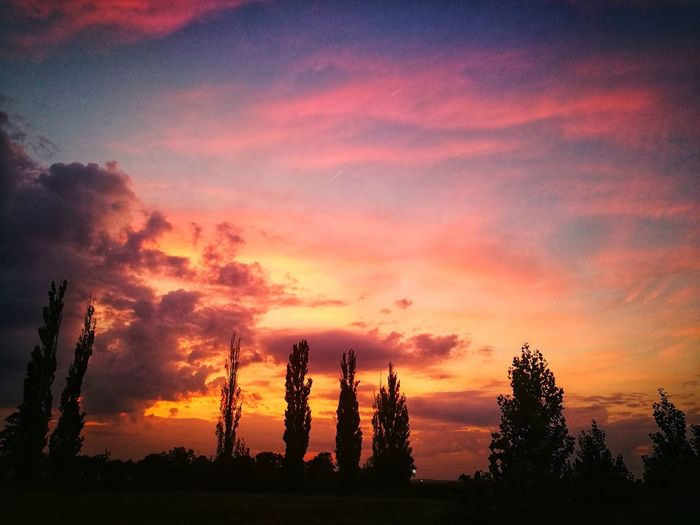 Sunset Sky Cloud - Sky Silhouette Orange Color Beauty In Nature Tree Plant Tranquil Scene Tranquility Scenics - Nature No People Nature Idyllic Non-urban Scene Outdoors Dramatic Sky Land Environment Low Angle View Romantic Sky
