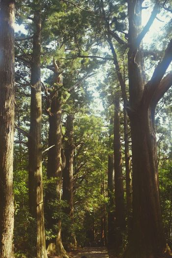Tree Nature No People Green Color Forest 大門坂 Tree Trunk Beauty In Nature