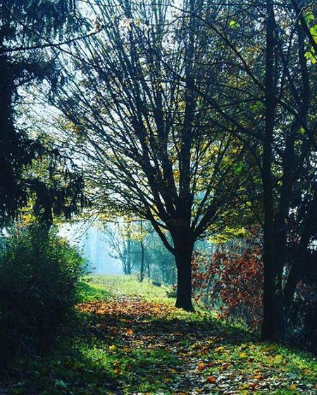 The sun in the tree Instantnature Sun Sole Canon Castelleone CanonEOS650D Nature Autumn Autunno  Photo Foglie