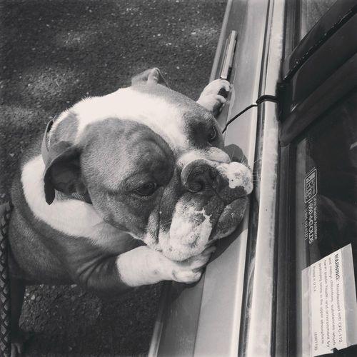 bored 忠犬八公