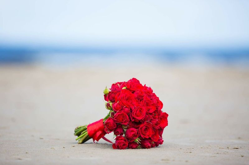 Close-up of red rose on beach