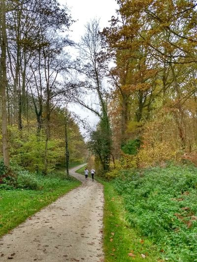 Tree Grass Green Color Growth Nature The Way Forward Day Outdoors Real People Beauty In Nature Sky One Person Animal Themes People Jogging Running Two People WoodLand Forest Belgium Liedekerkebos Autumn Tranquility Scenics Fall
