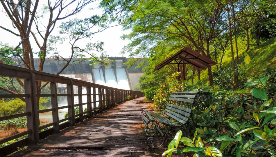 Park Alone Chair Scenery Dam Trees Woods India Kerala Nikon