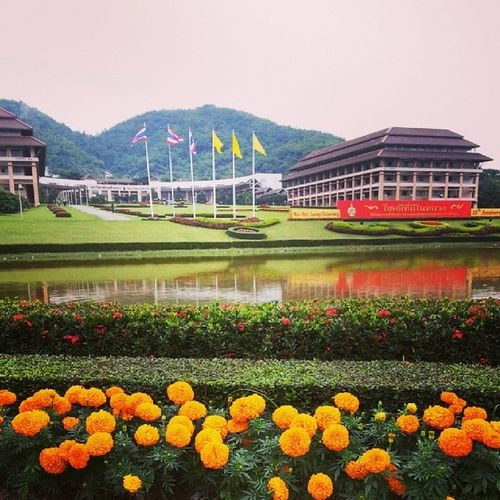 มหาวิทยาลัยแม่ฟ้าหลวง เชียงราย หนาวจังเลยย >< Chiangrai