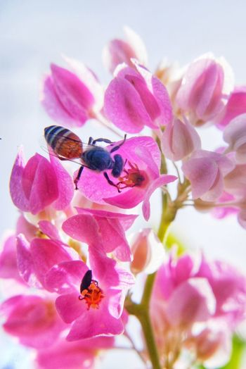 Close-up of honey bee on pink flowering plant