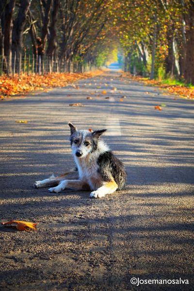Perros De La Calle Homeless Dogs Colour Of Life