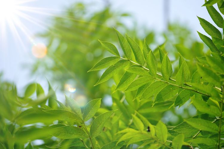 green tree leaves and branches in the nature in summer Tree Plant Green Green Color Leaves Branch Branches Leaf Summer Bright Sunlight Nature Beauty In Nature Backgrounds Plant Part Close-up Growth No People Day Outdoors Textured  Abstract