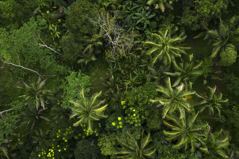 High angle view of fresh green plants in forest