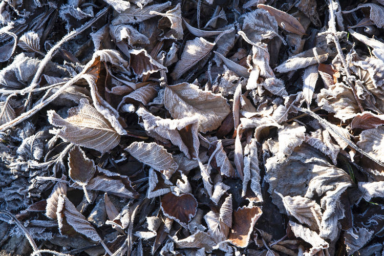 Full frame shot of dried plant on field