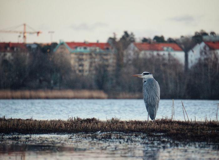 Bird perching at a lake