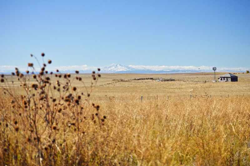 Beyond tall grass Mountains In Background Grass Dead Sunflowers Corral Outdoors In The Distance. Fence Barbed Wire West Of Lusk Wyoming Clear Sky Blue Sunny
