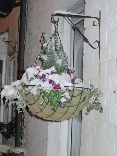 Hangingbasket Snow Wintertime Newbury Uk United Kingdom Cold Temperature