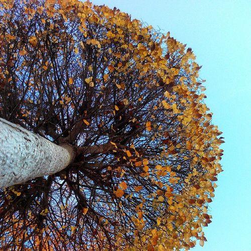 Otoño 2014 Diciembre Frio Hojas Colores árbol Natura SPAIN Nice Cute