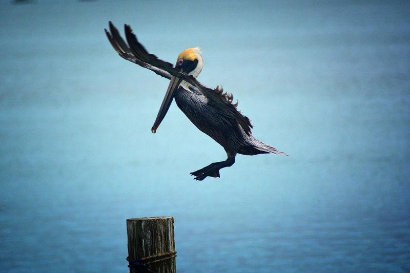 Bird flying over wooden post against sky