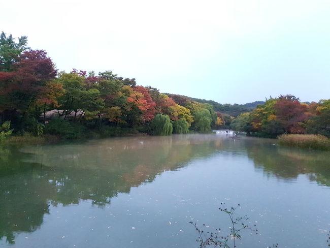 민속촌 Tree Water Multi Colored Autumn Lake Reflection Sky Landscape Reflection Lake Reflecting Pool Pine Tree