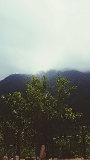 Artvin Turkey Road To Kafkasör Eyembestshots Nature Nature Lover i like green