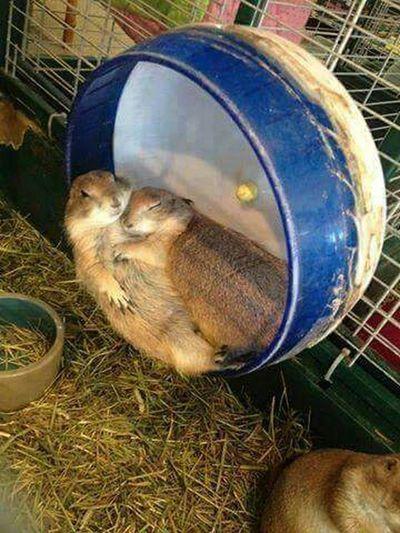 Chipmunks Love