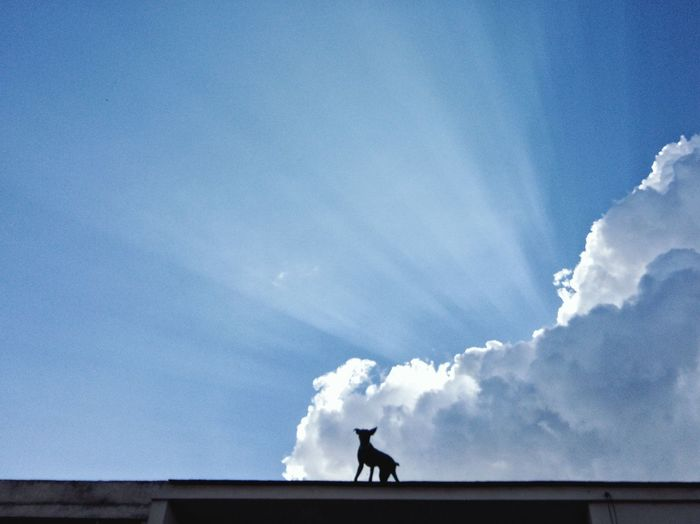 Low angle view of silhouette bird on roof against sky