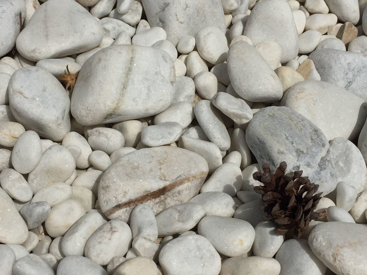 High Angle View Of Dried Pine Cone On Pebbles