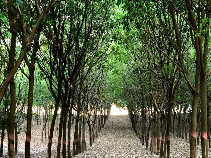 Green Growth Garden Rubber Plantation