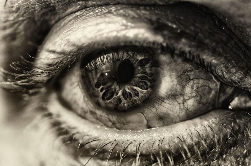 Human Eye Real