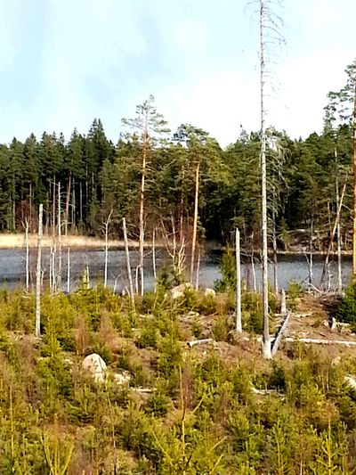 Lake View Forest Landscape_Collection