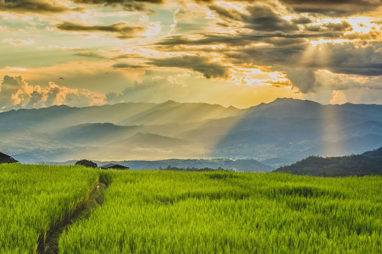 Hills Rice Paddy Sunlight Thailand Agriculture Beauty In Nature Cereal Plant Cloud - Sky Cottage Crop  Day Environment Farm Field Fog Green Color Growth Landscape Mist Mountain Nature No People Outdoors Rice - Cereal Plant Rice Field Rice Paddy Rice Terrace Rural Scene Scenics Sky Springtime Sun Sunbeam Sunset Tranquil Scene Tranquility